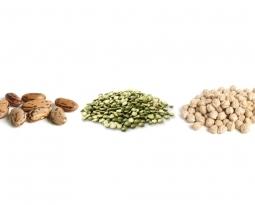 素食者恩物:豆類植物